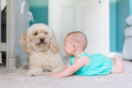 pets, kids and carpet